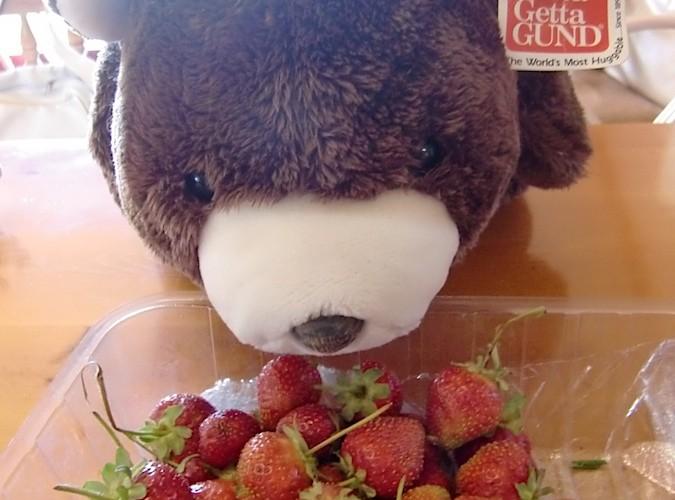 新鮮的草莓!