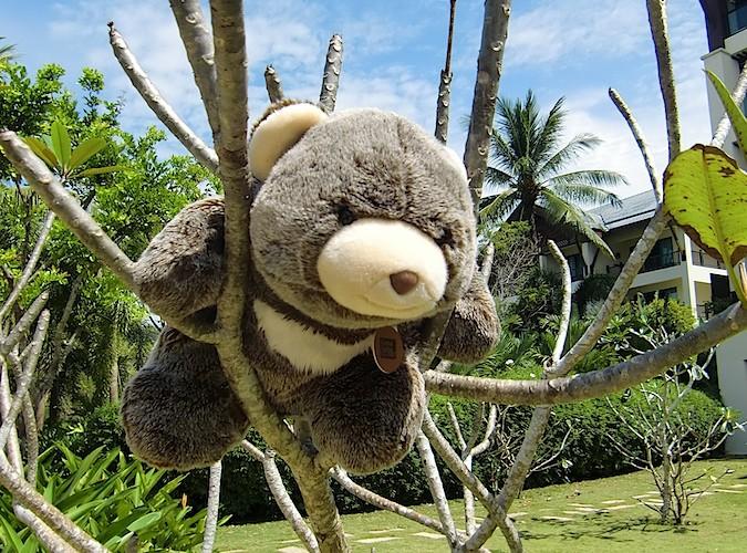 Fumblie climbs a tree