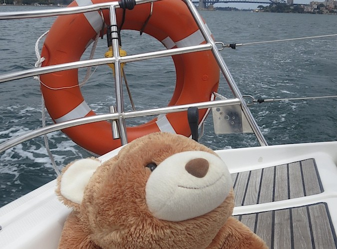 Chillie goes sailing on Sydney Harbour