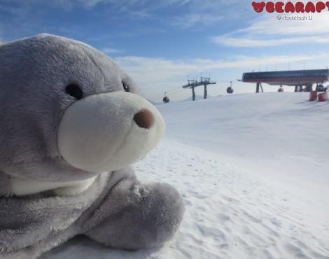 Scruffie in snow